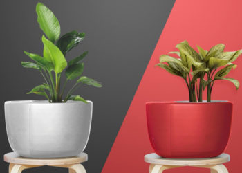 Штука дня: Urbie Air — умный цветочный горшок. Он поглощает излишнюю влагу и использует её для полива растения