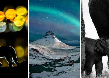 то природы 2019 года по версии Nature Photographer Of The Year