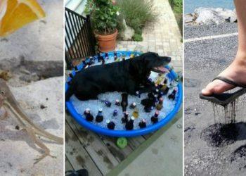 Как выглядит настоящая жара: 15 фото от пользователей Сети